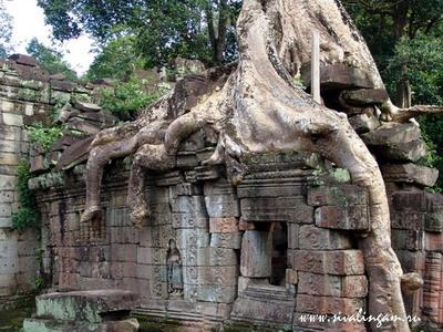 Камбодиа, видео